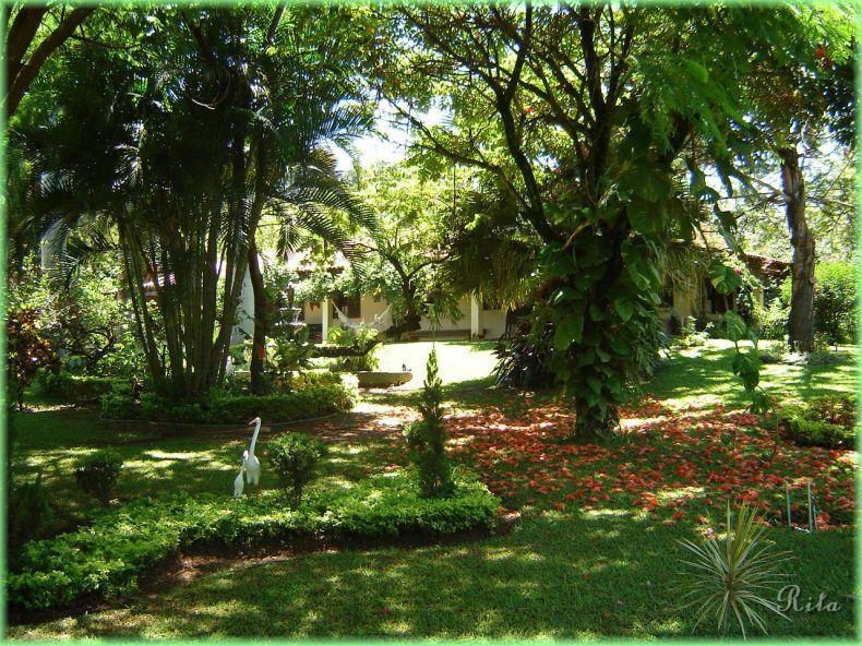 Flores, Jardins e Paisagismo/05Vista