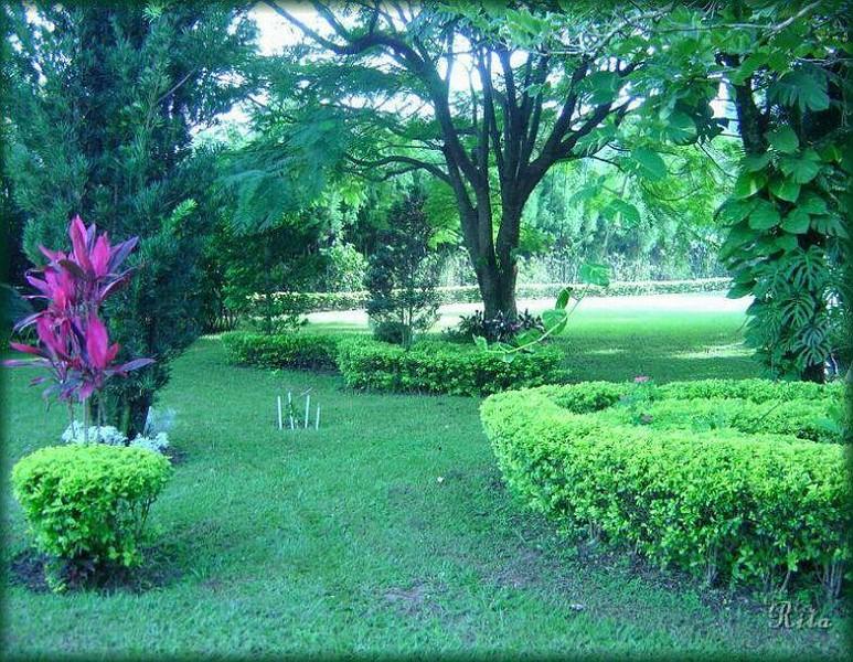 flores jardins e paisagismo ? Doitri.com