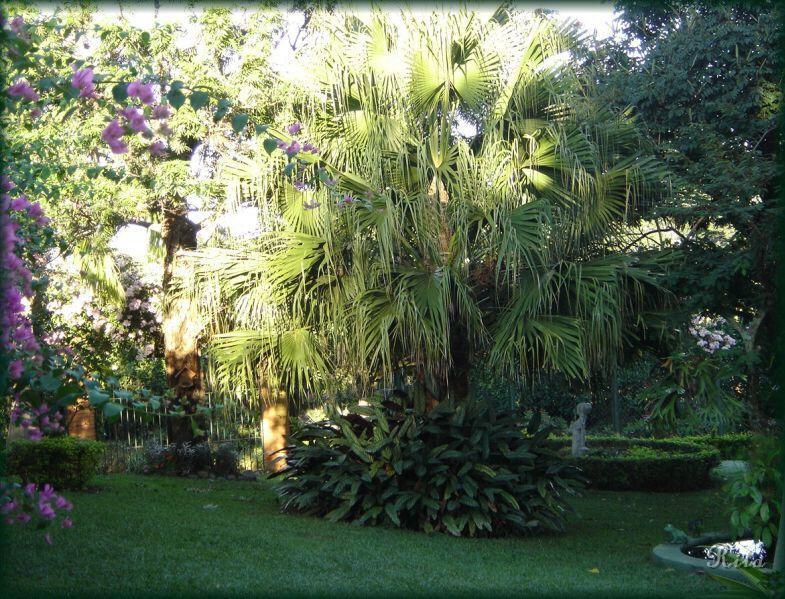 flores jardins e paisagismo : flores jardins e paisagismo ? Doitri.com