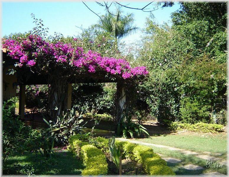 plantas jardins flores