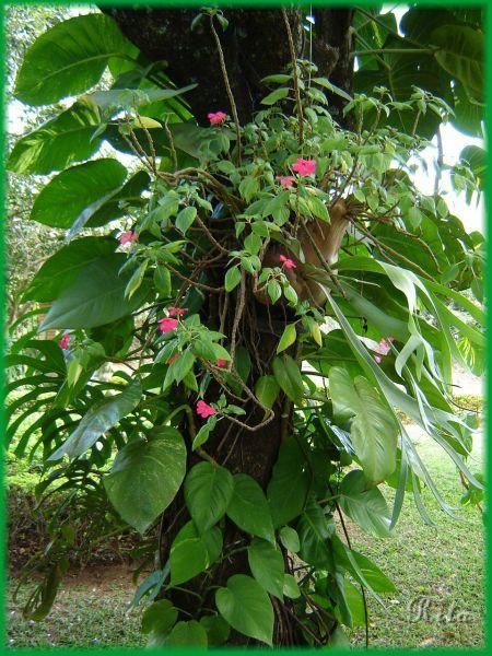 Flores, Jardins e Paisagismo/JiboiaeOutras
